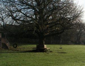 The Horse chestnut Tree in Clapham Recreation Ground